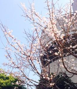 梅の花‥☆